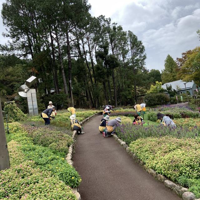 花の文化園 装飾花壇  Photo 2019年10月17日